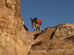 Mr William in Petra