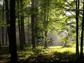 The forest behind the wooden church