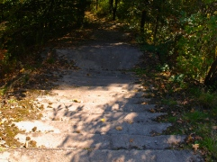 Stairs in the forest.. (wtf?)