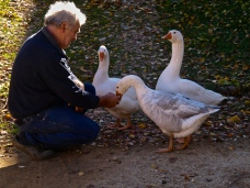 Sandra's dad and his gooses (they are sooo loud!)