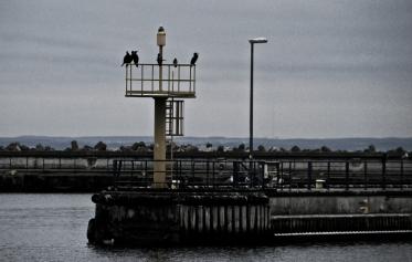 Harbour's guards