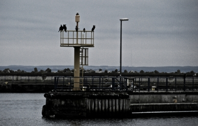 Harbour's guards